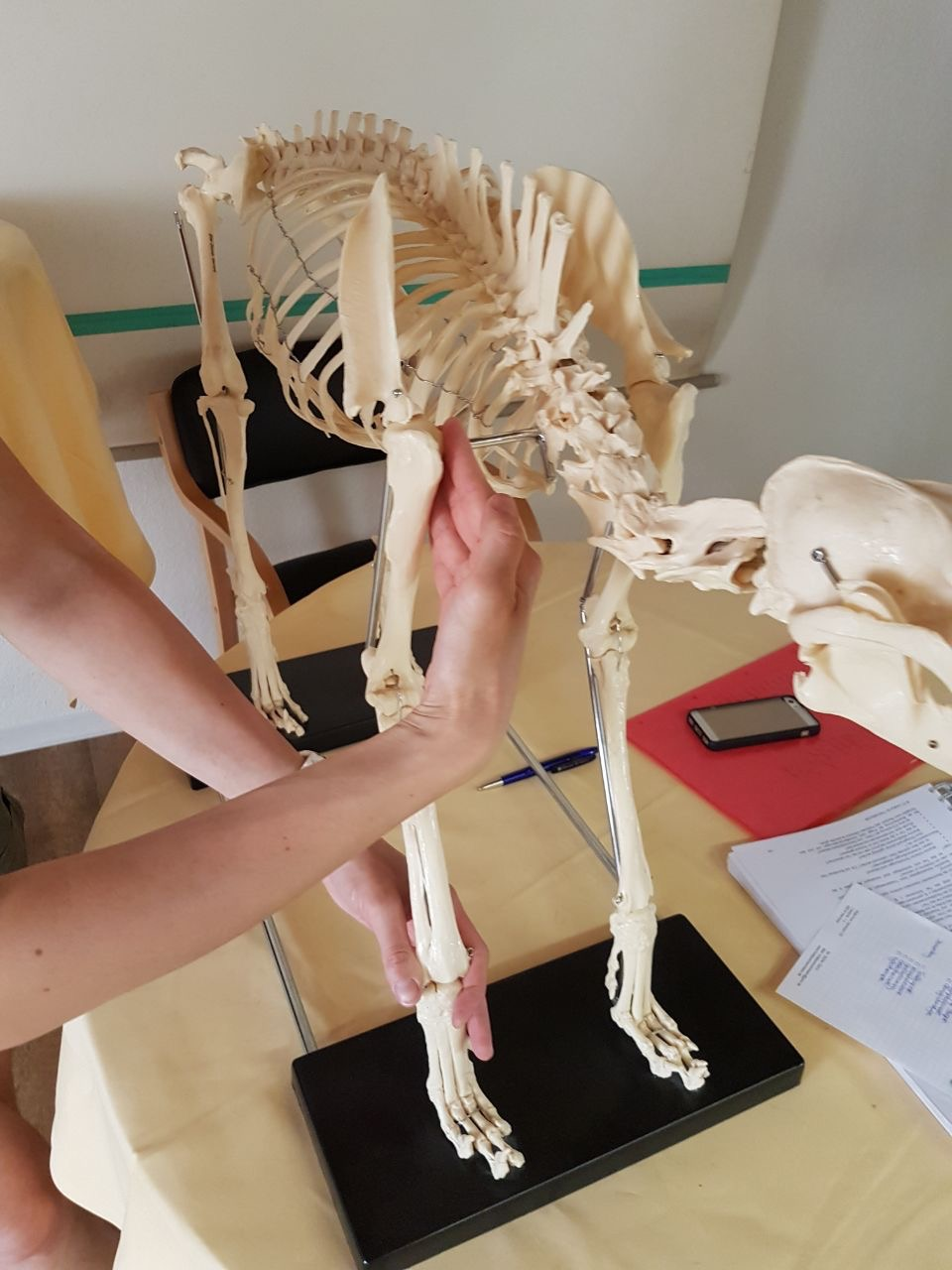 Physio Griffe 2